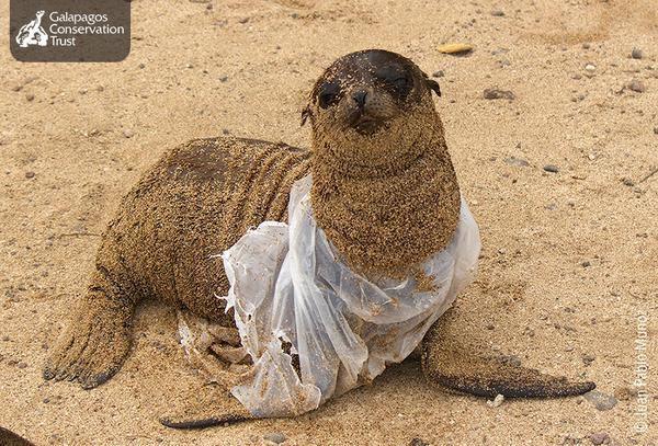 Ces photos ne représentent pas des faits exceptionnels. Les océans contiennent presqu'autant de déchets en plastique que de poissons à l'heure actuelle.