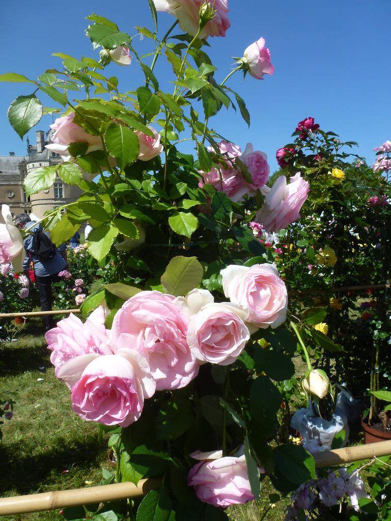 La fête des jardiniers au château du Lude (Sarthe).