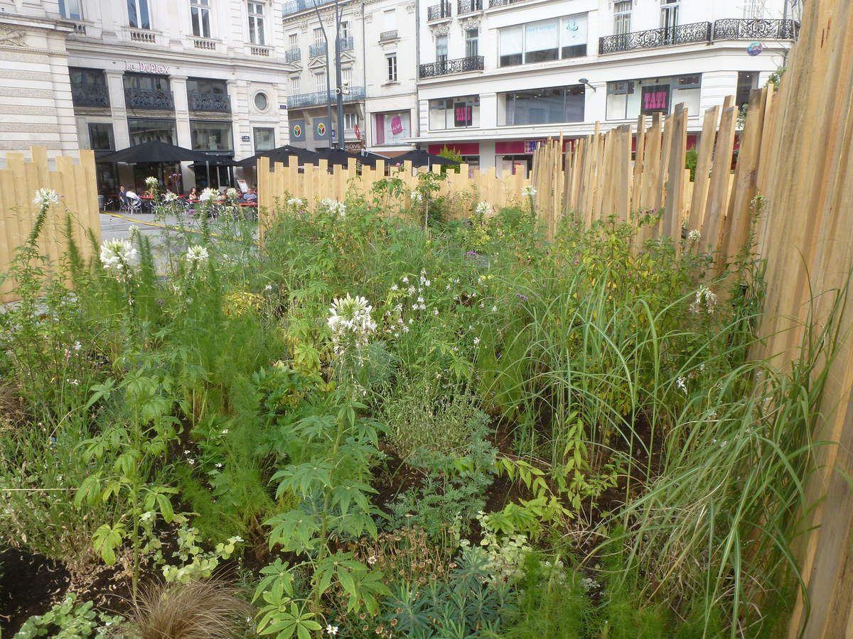 Un jardin éphémère place du ralliement à Angers où il fait bon déhambuler dans la fraicheur des allées. Belle réalisation !