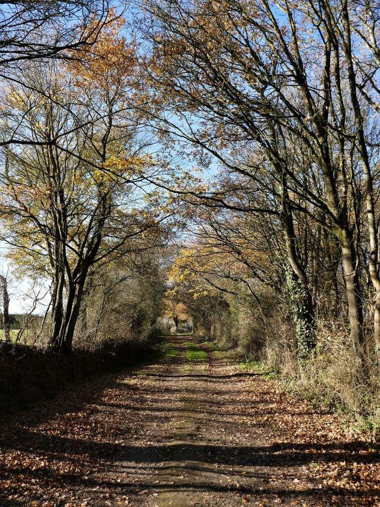 L'automne 2017 à Beaucouzé