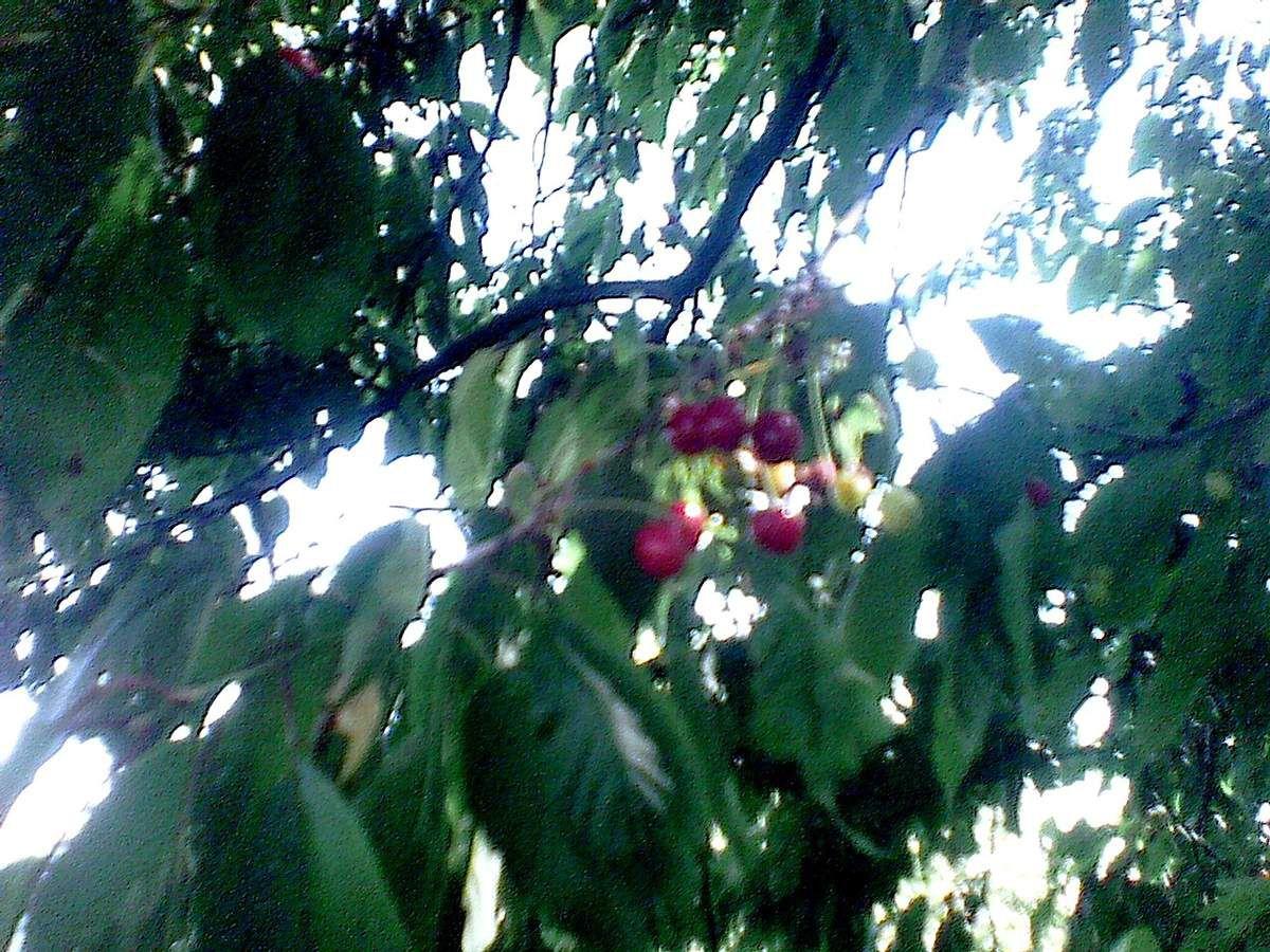 Une fine fleur et l'on s'échine au fruit