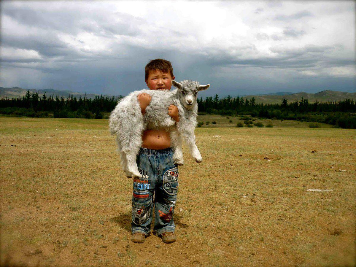 La laine sur le cœur
