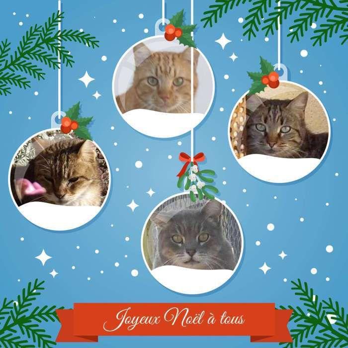Pour Noël, pour vous tous