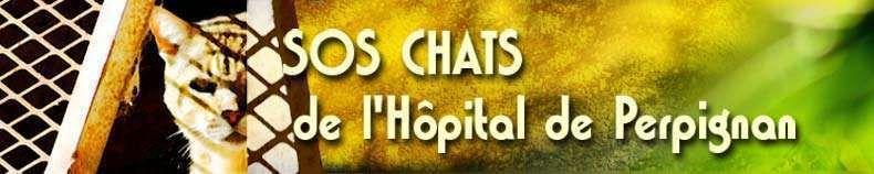 Le blog de l'association SOS Chats de l'Hôpital de Perpignan