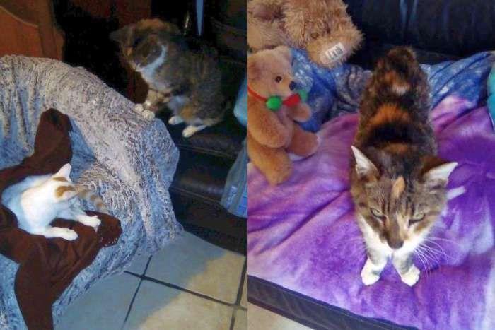 Perrine se réveille doucement. Mémé Fifi est inquiète pour elle (étonnant de sa part !)
