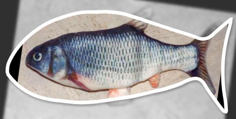 Le jour du poisson.