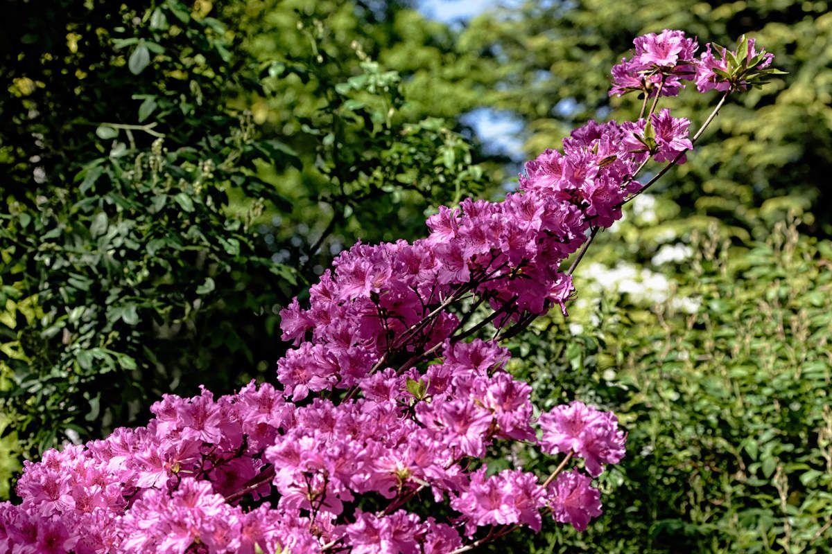 Le jardin de Liliane - mai