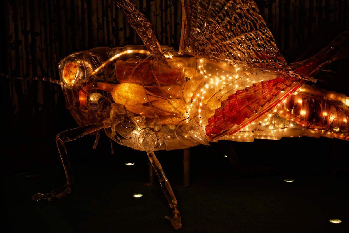 Photos à la Cité des Insectes