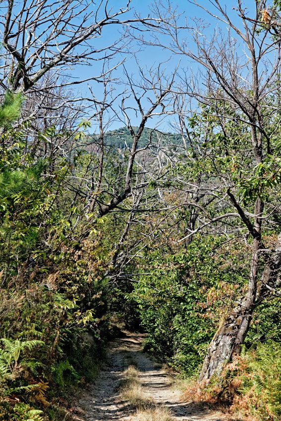 L'Ardèche - St-Mélany