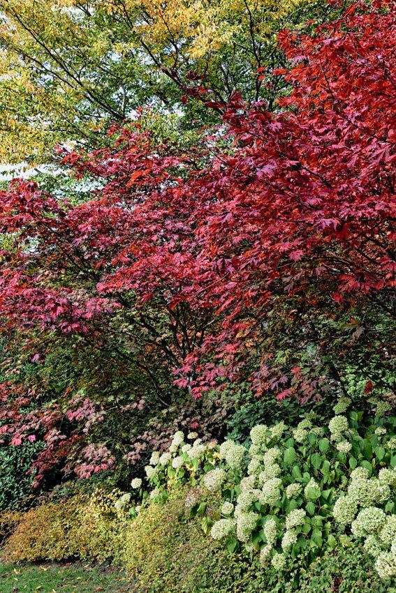 L'arboretum de la Sédelle - 1
