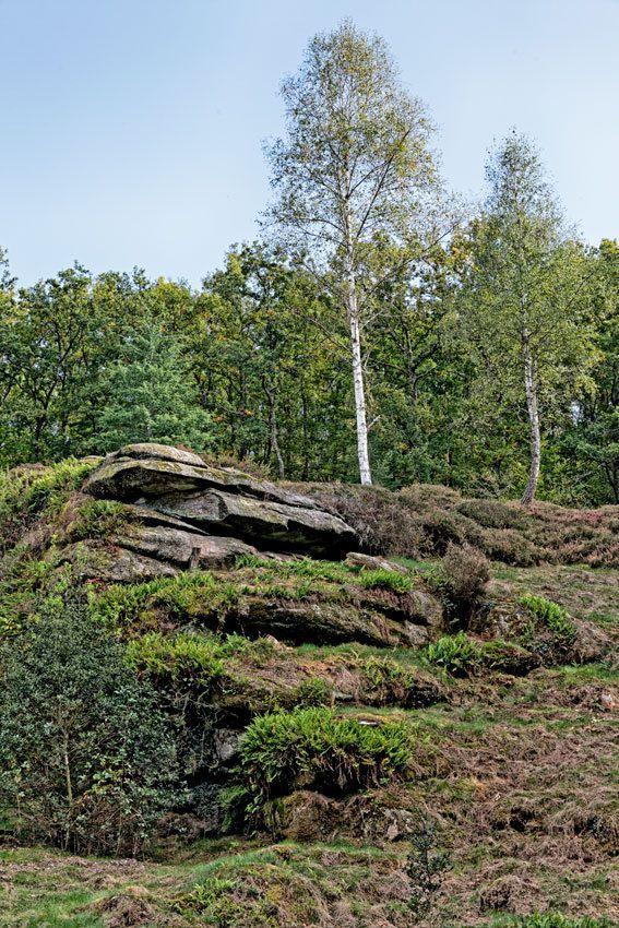 L'Arboretum de la Sédelle - 3