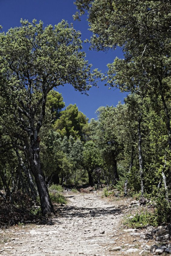 Le Prieuré de Ganagobie  -  Haute-Provence