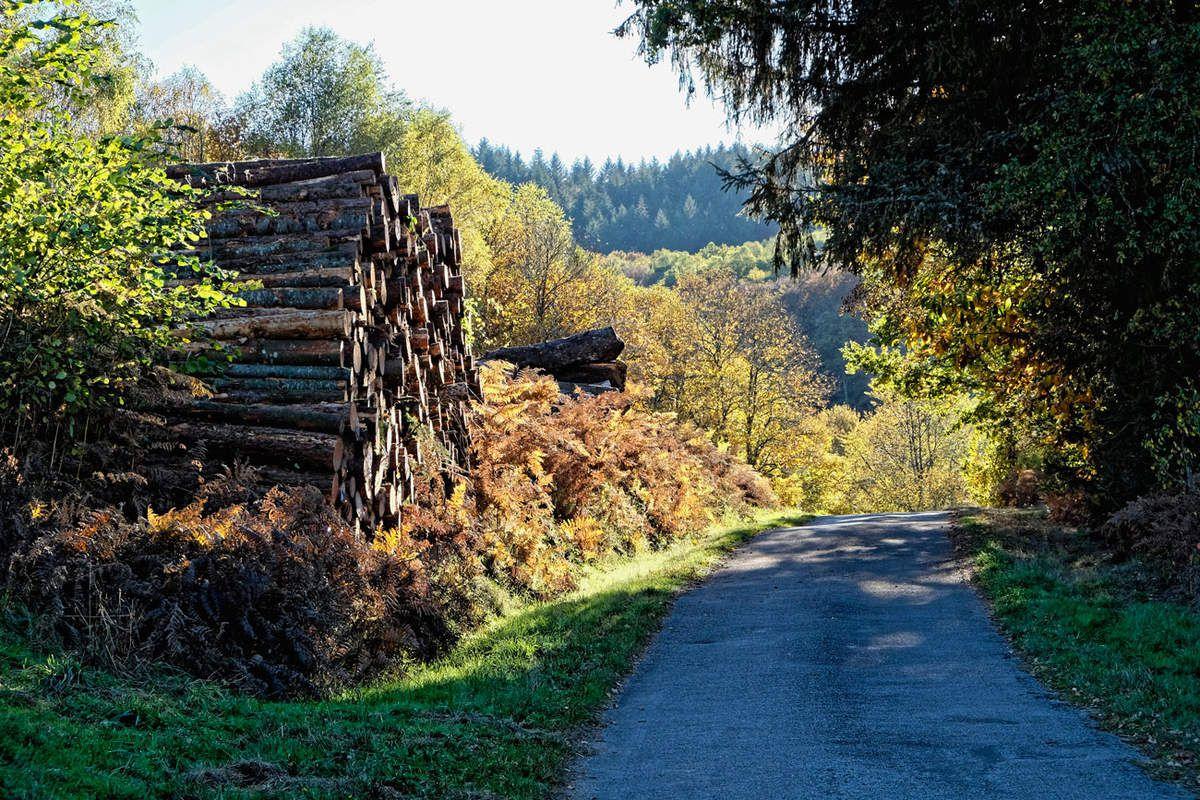 Itinéraire automnal dans les Monts d'Ambazac - 3