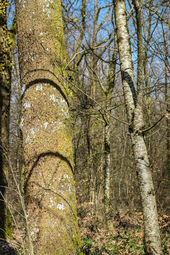 La forêt en zone périurbaine à Limoges