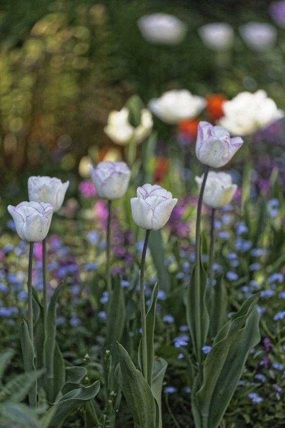 Le printemps au jardin - 1