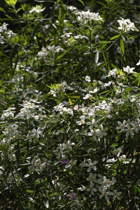 Le Jardin de Liliane - Fin avril 2018 - 1