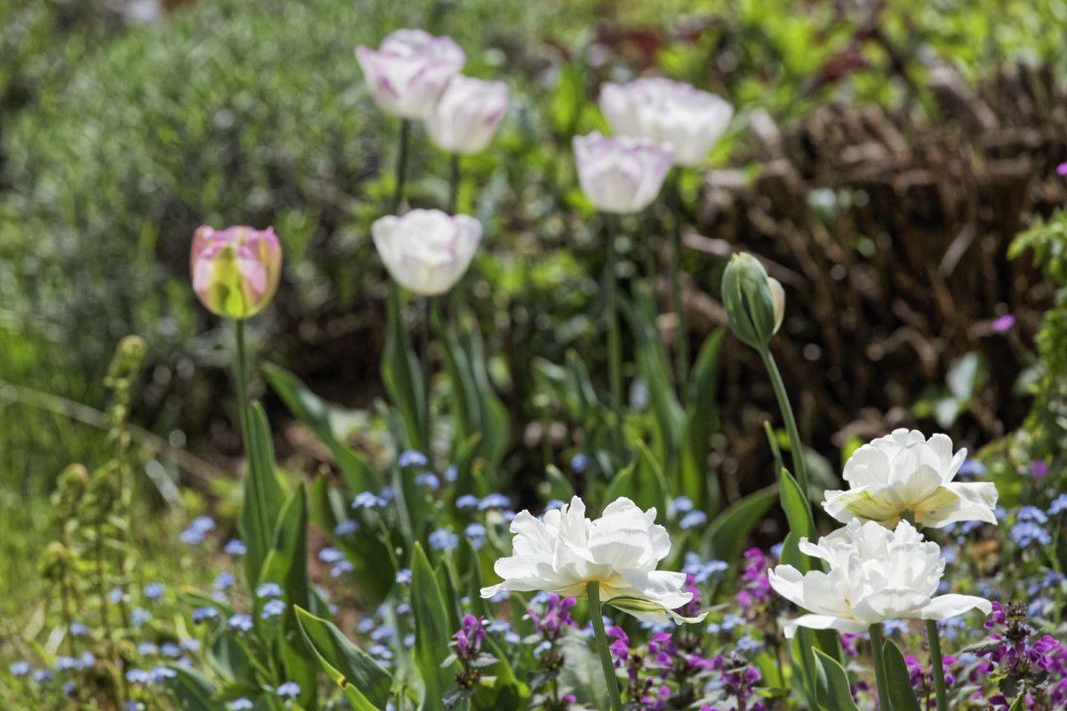 Le printemps au jardin - 2