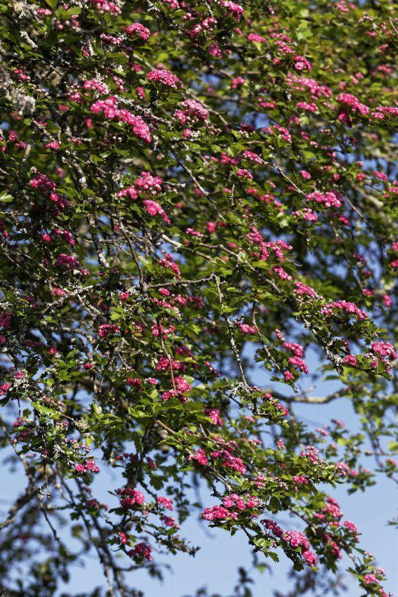 Le printemps au Jardin - 3