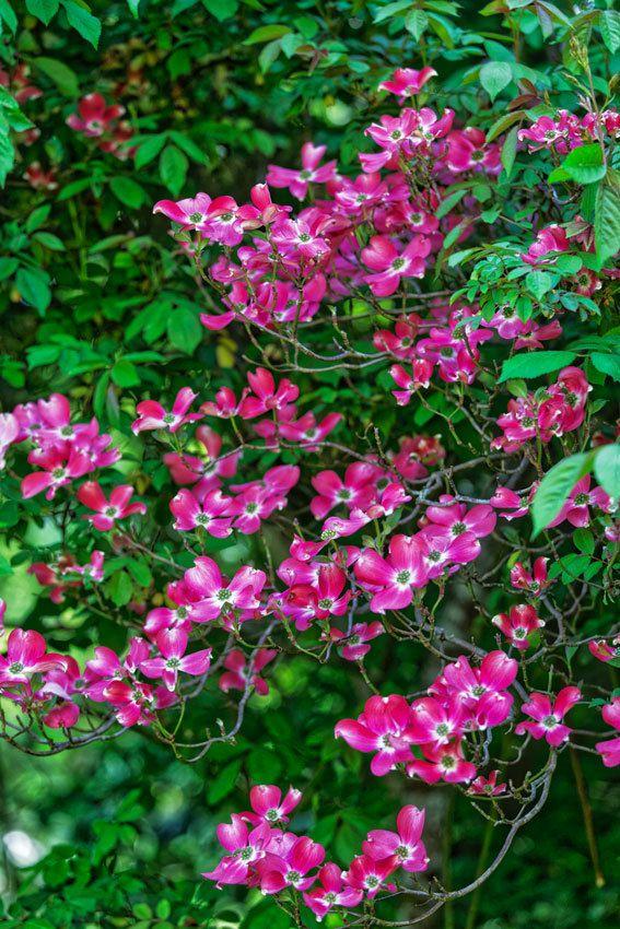 Le Jardin de Liliane - Fin Avril 2018  - 4