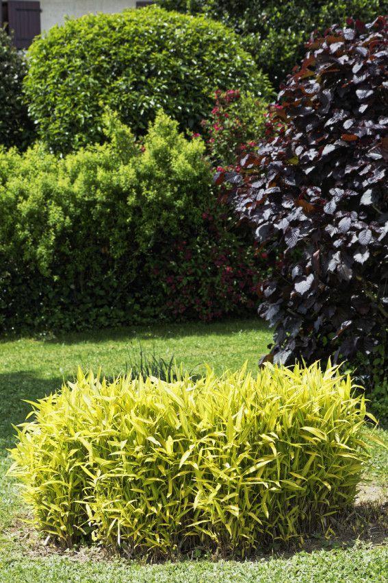 Le Printemps au Jardin - 5