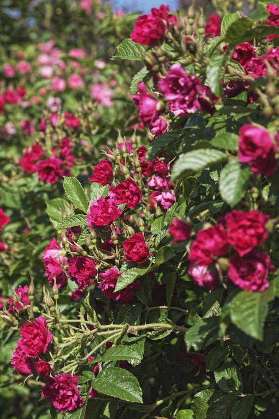 Le jardin en mai et juin