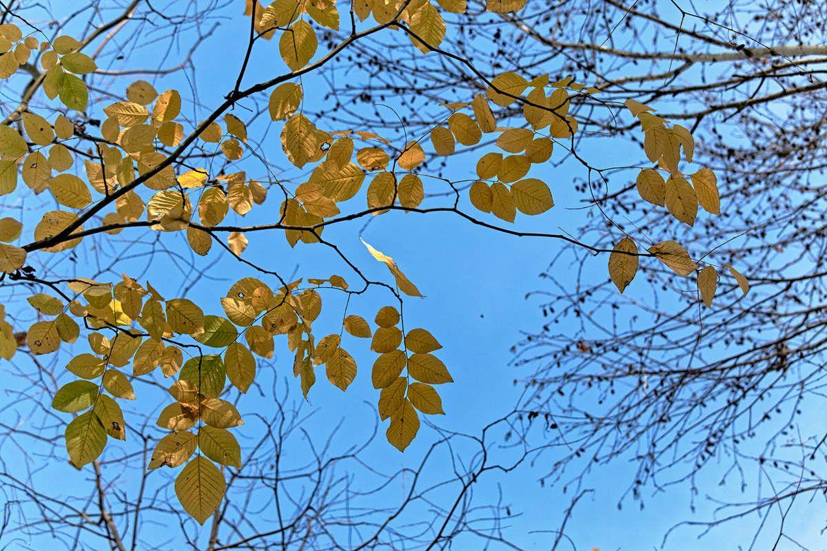 Le Jardin de Liliane - automne  2
