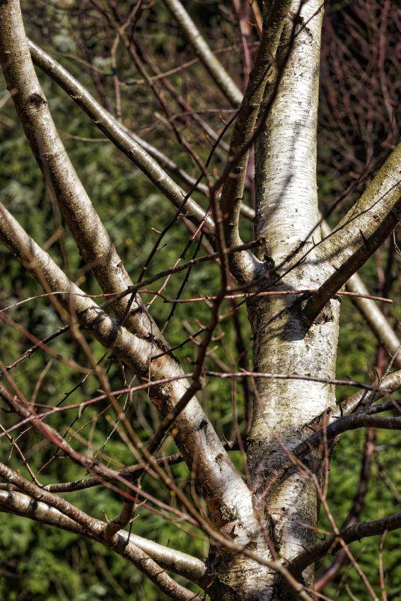 L'arboretum de la Jonchère - Haute-Vienne