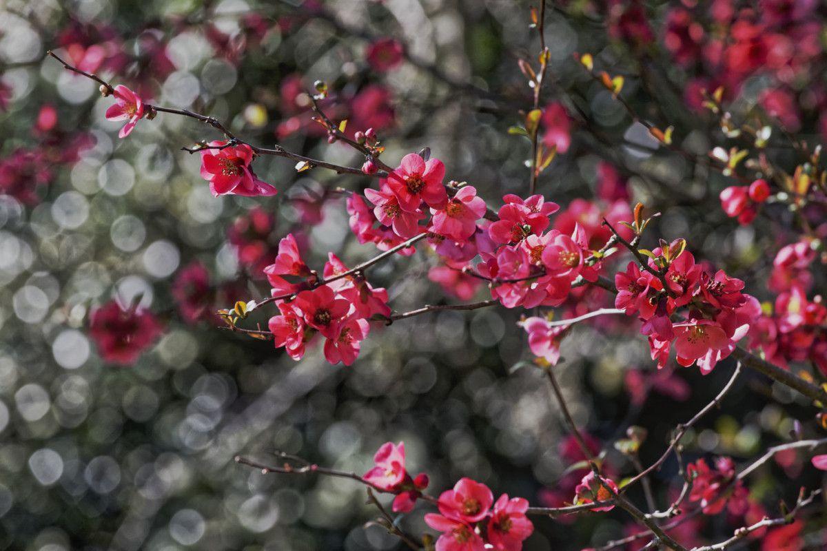 Au début du printemps