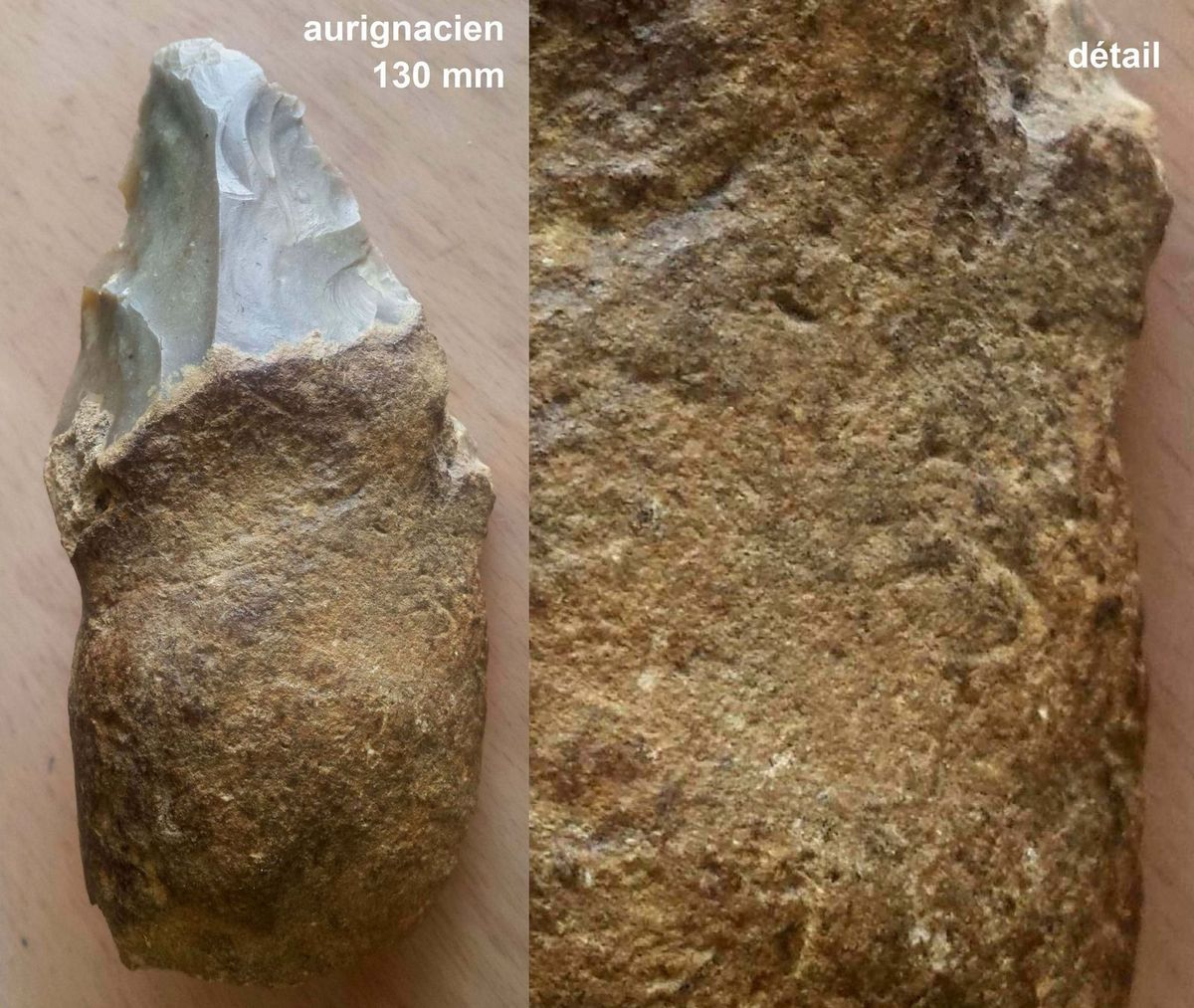 aurignacien aurignacian horse bear cheval ours paleolithique paleolithic