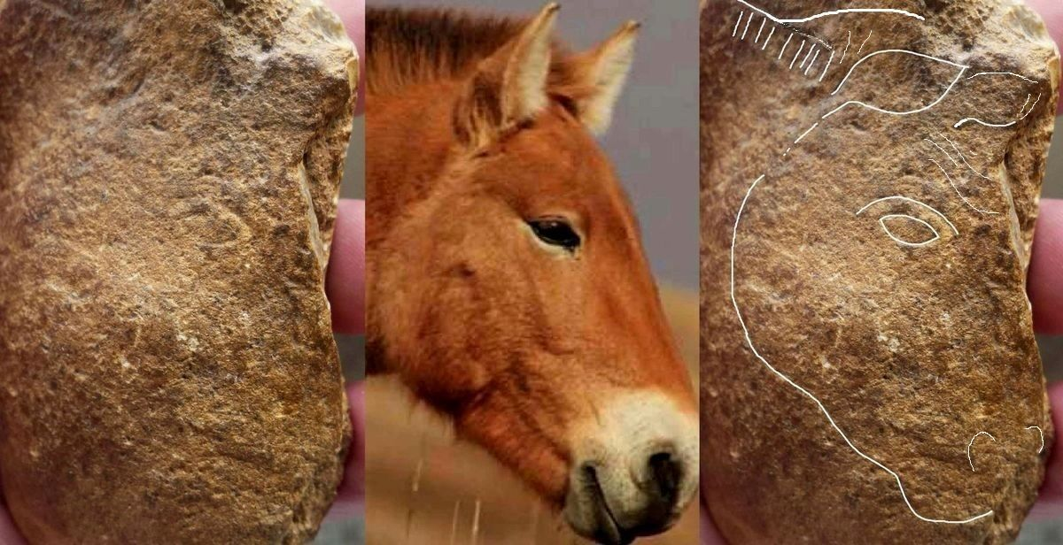 aurignacien, cortex gravé cheval horse ours aurignacian bear horse paleolithique, paleolithic