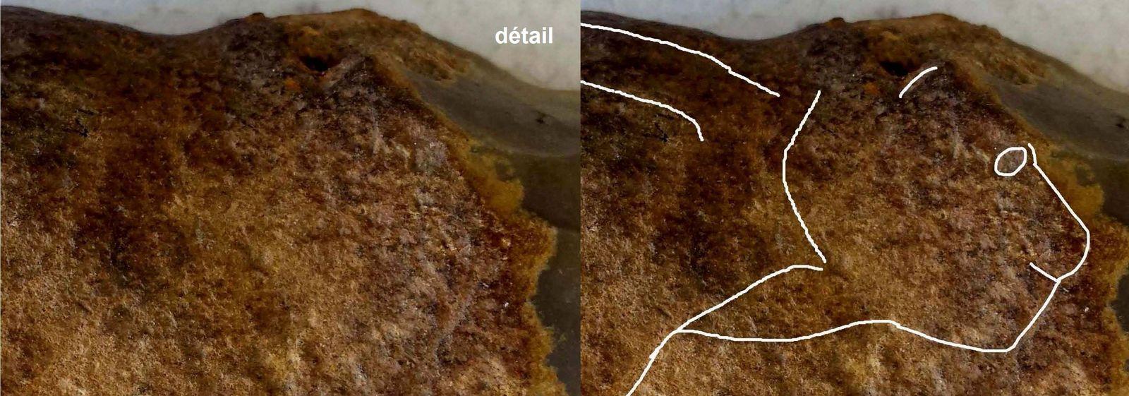 aurignacien, cortex gravé  lion felin - aurignacian feline  paleolithique, paleolithic