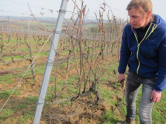 Apprendre à tailler la vigne avec Angélica