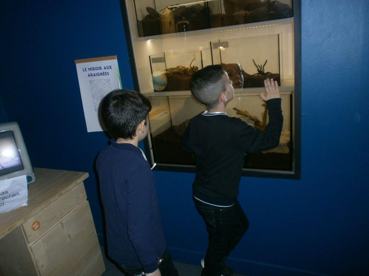 Sortie Muséum d'Histoire Naturelle