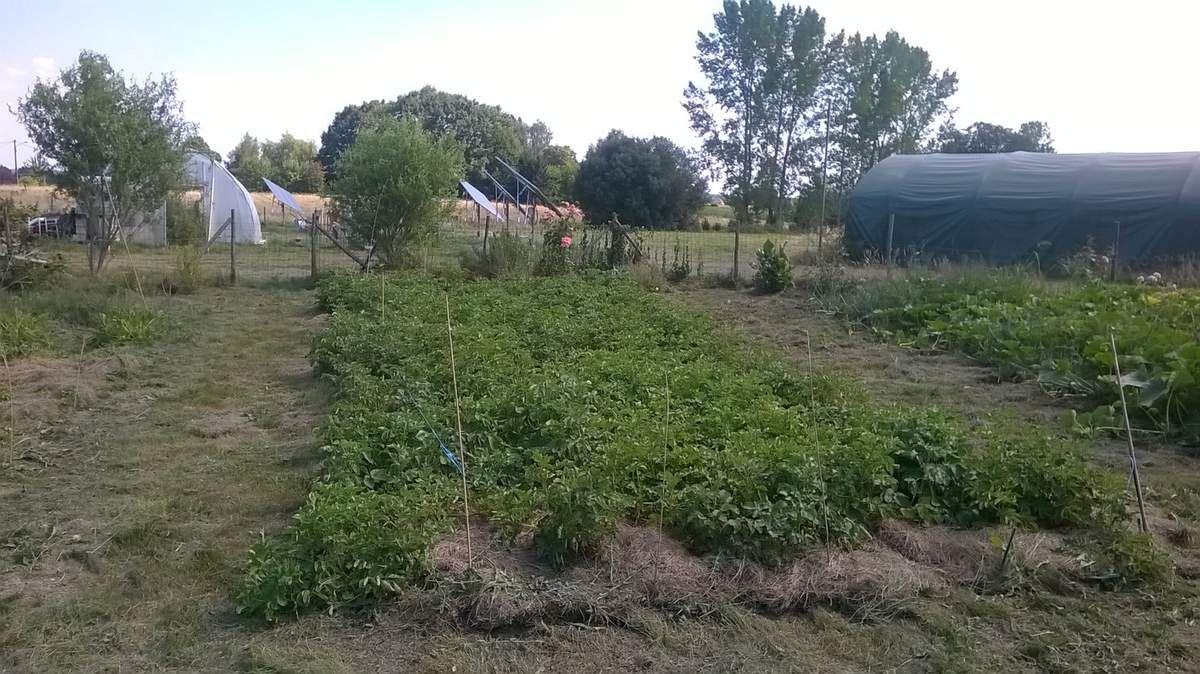 espace pommes de terre