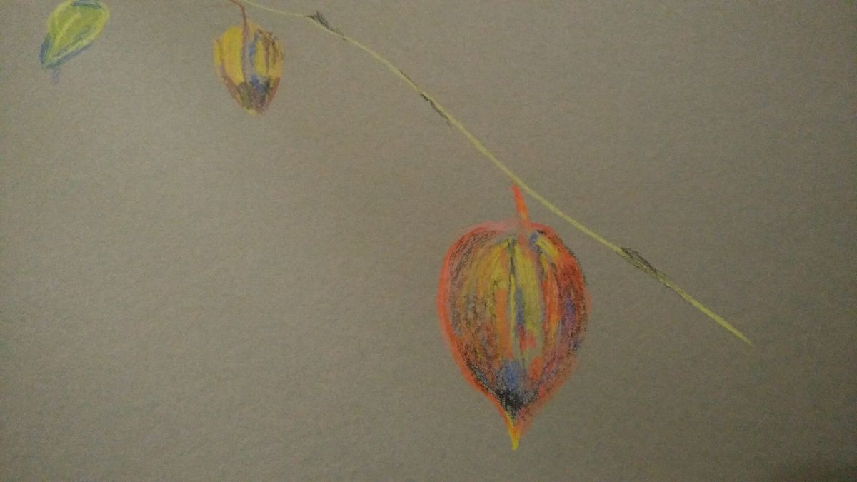 Modigliani et physalis à l'atelier dessin