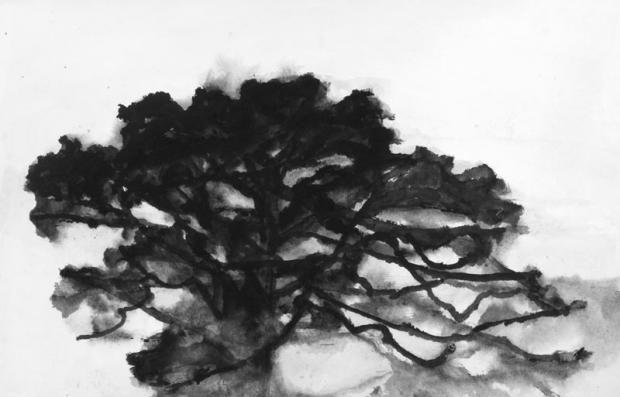 Hollan - Chêne gouache sur papier