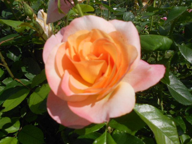 Rose Isabelle Autissier.