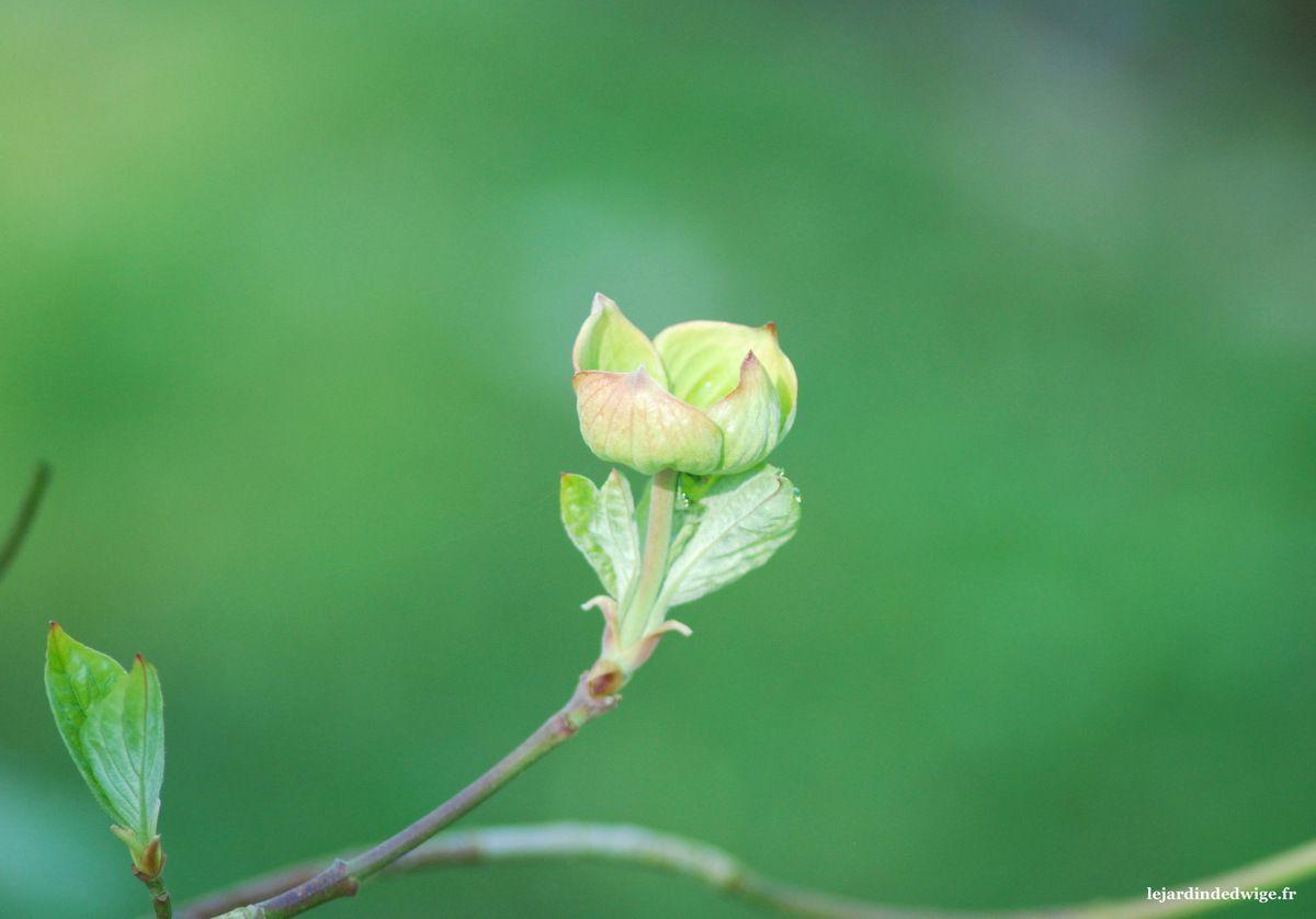 Début avril, la floraison se prépare