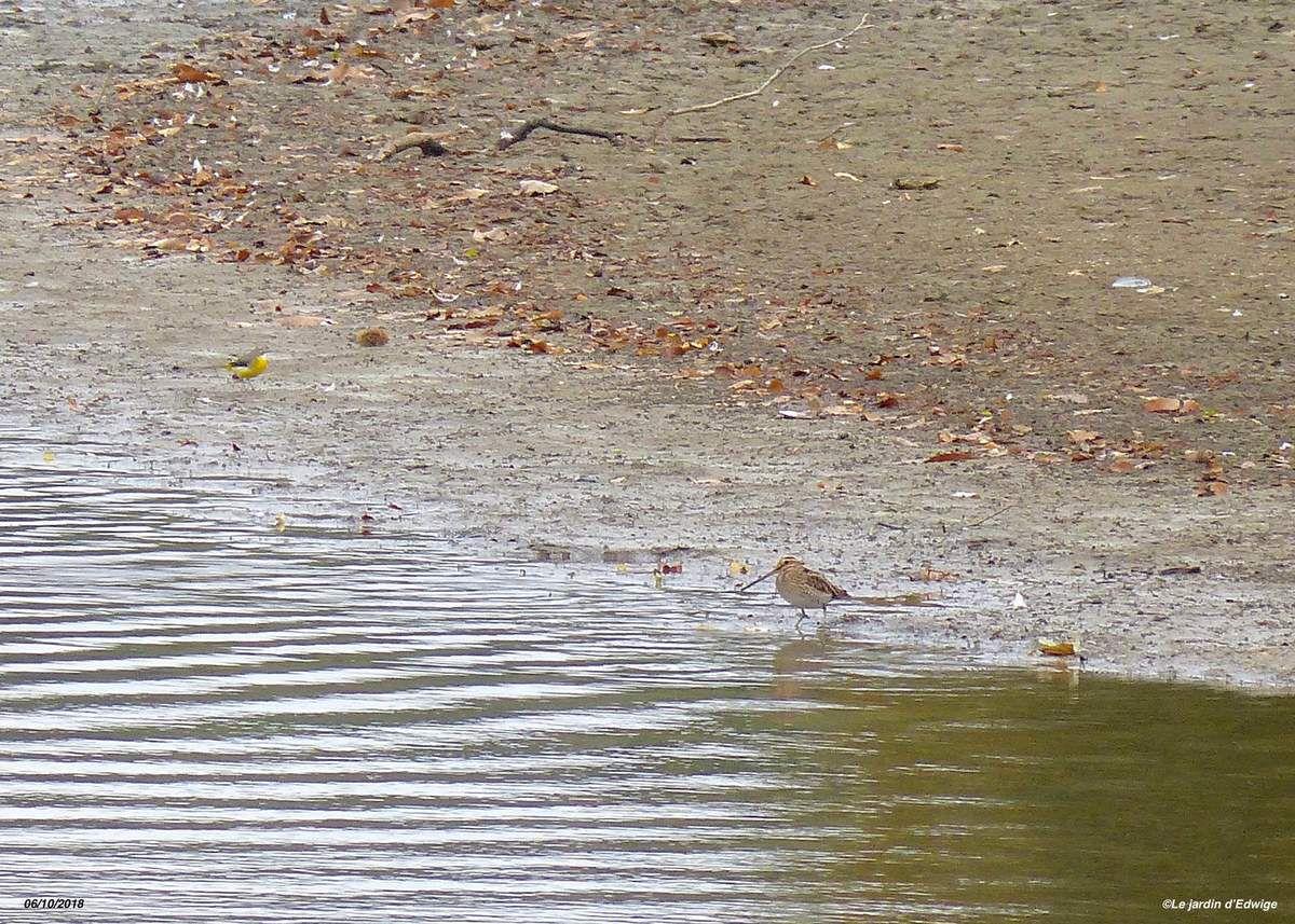 et la Bergeronnette des ruisseaux.
