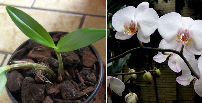 Voici Comment Faire Refleurir Une Orchid E Fan E En Vid O Astuces Beaut Sant Et Maison