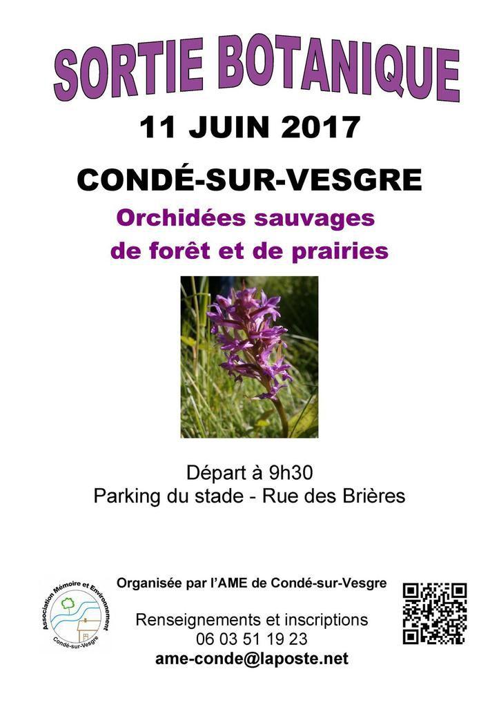 11 juin 2017 - Sortie botanique : Orchidées sauvages de forêt et de prairies