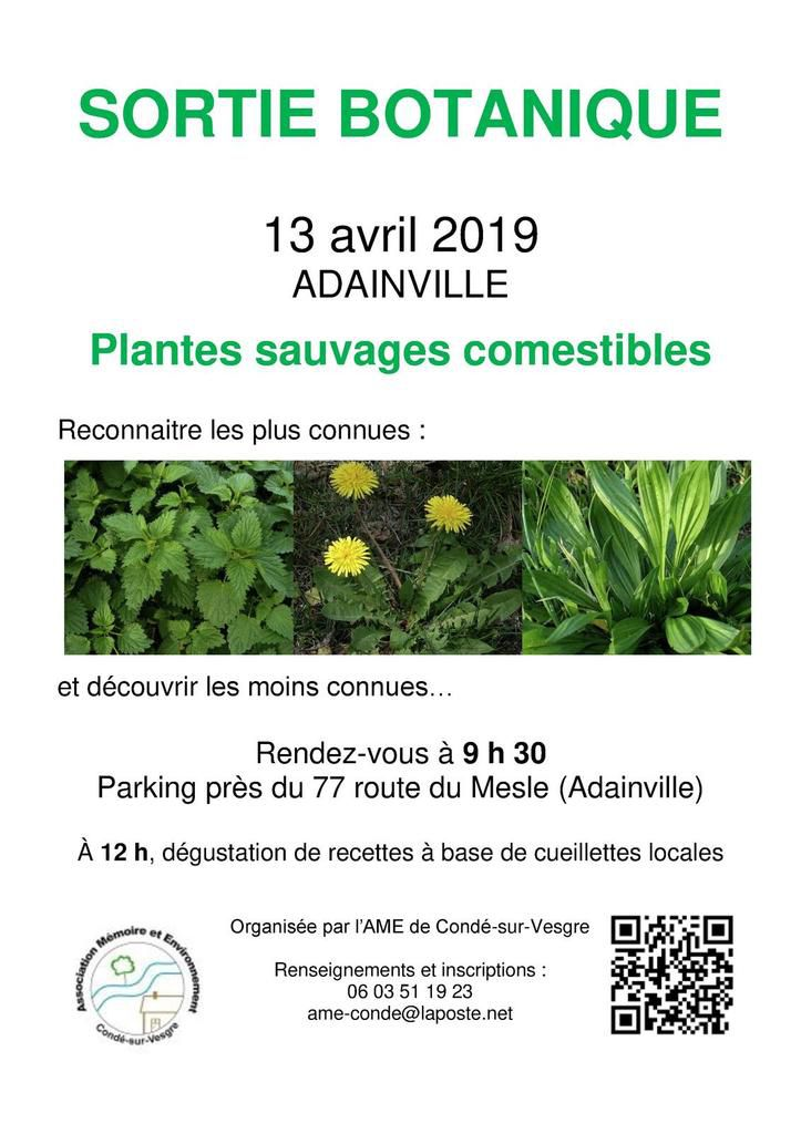 13 avril 2019 - Sortie plantes sauvages comestibles