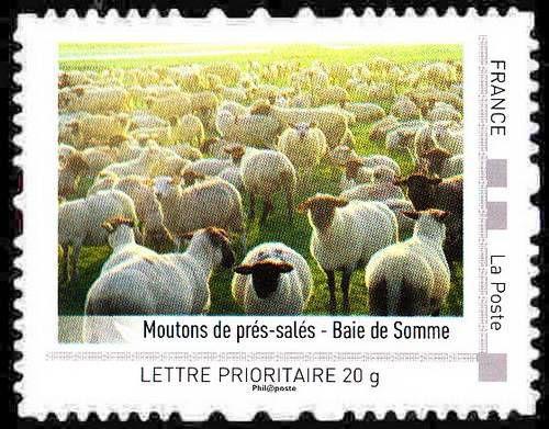 Ovins : agneaux, moutons et brebis