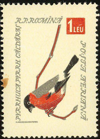 Le bouvreuil