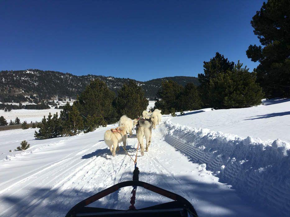 Quoi faire à part le ski dans les Pyrénées? Une balade en chiens de traîneau Les Traîneaux du Cambre