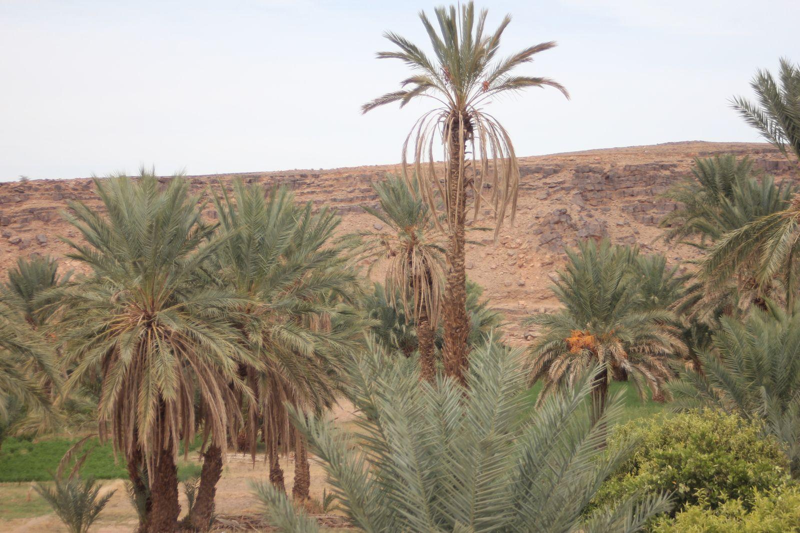 On the road : Erg Lihoudi - Alnif - Part 1