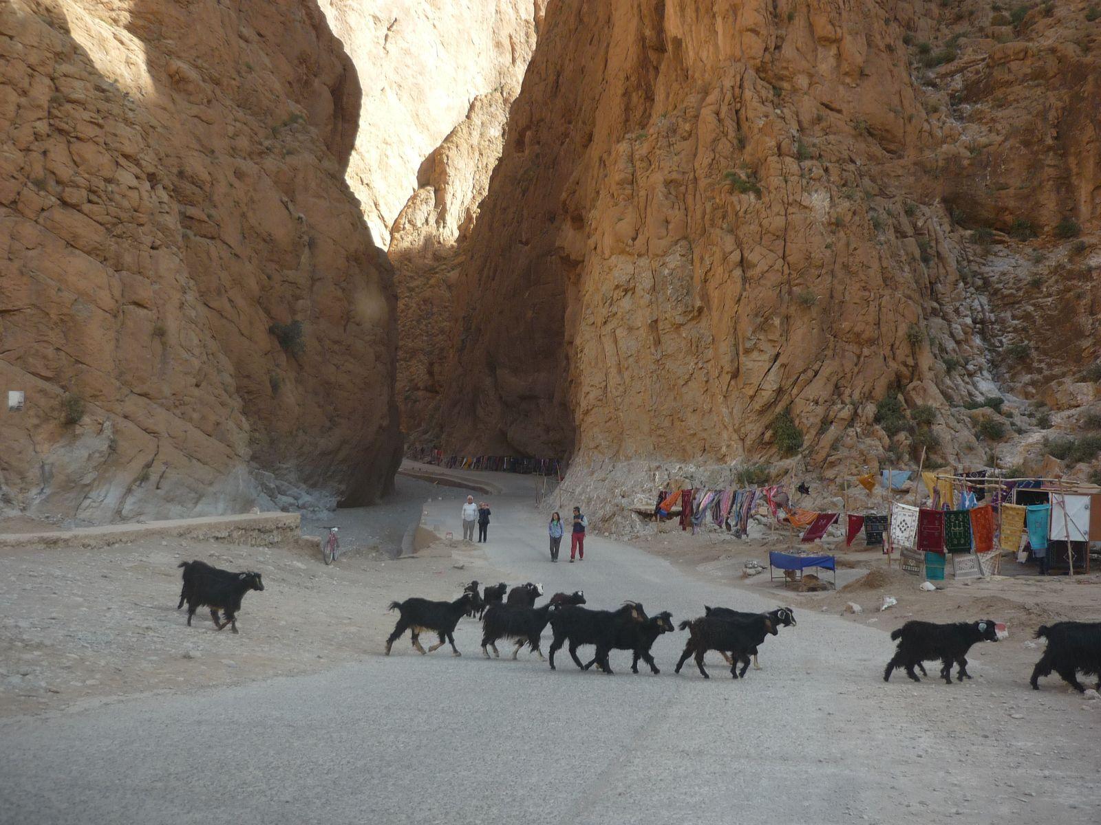 Gorges de la Todgha