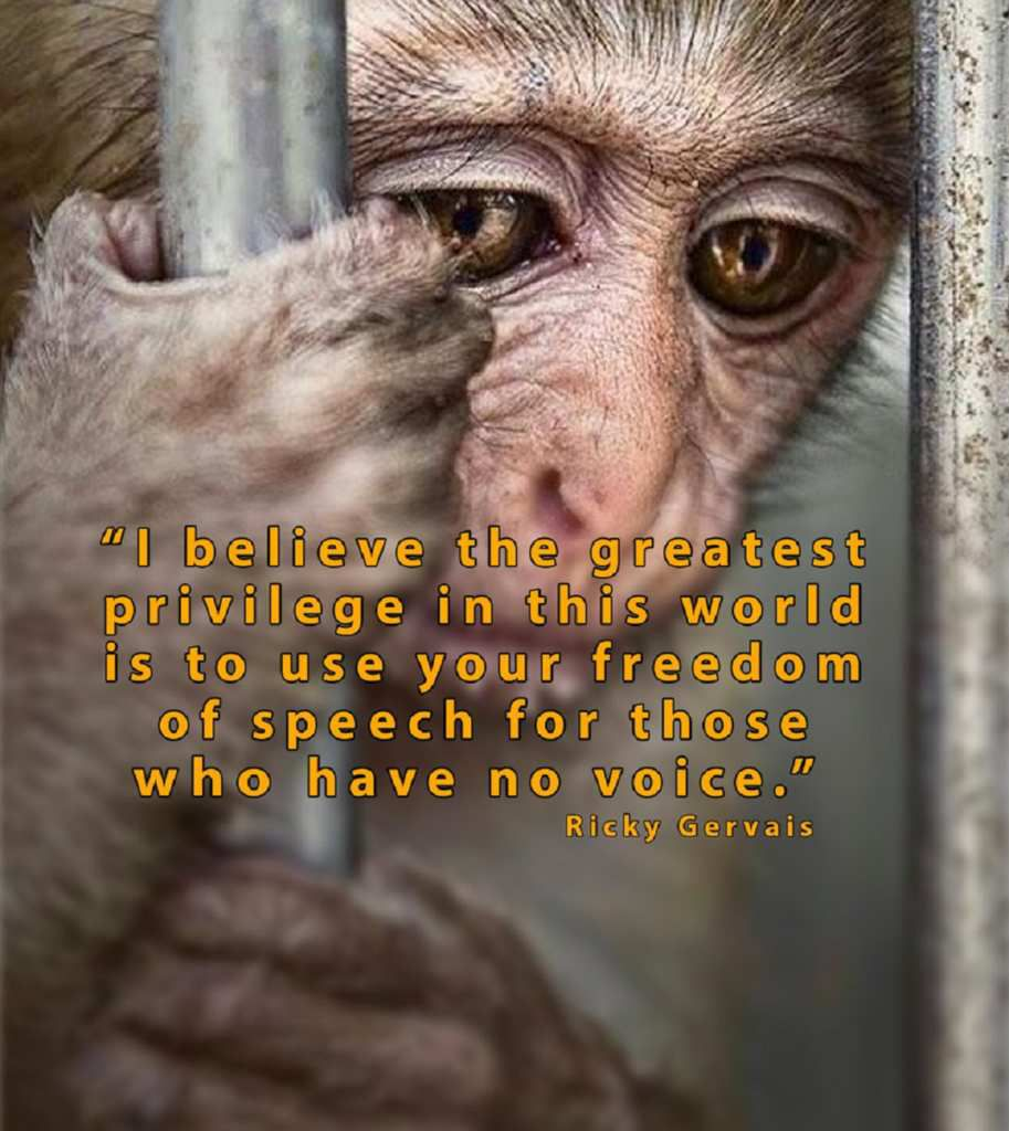 Mercy For Animals  -  Animal Advocate