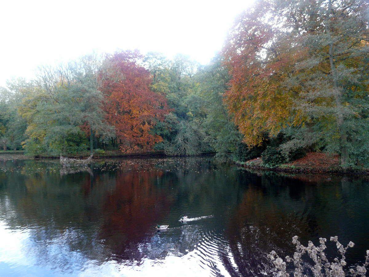 Soupe aux pois cassés, racines anciennes et curry vert - Région Nord (6) le Parc de Wavrechain sous Denain