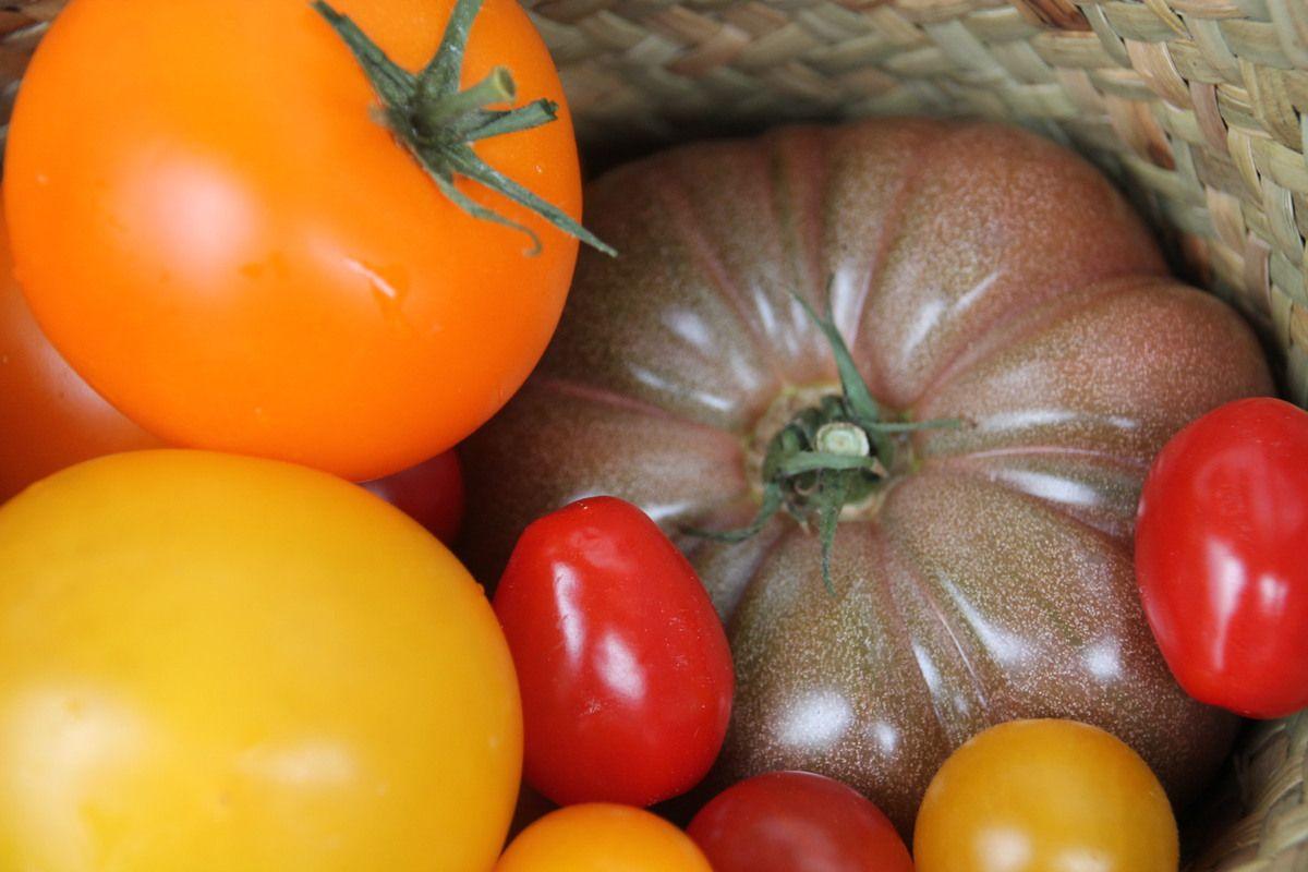 Salade de tomates, bouchées de thon rouge aux graines